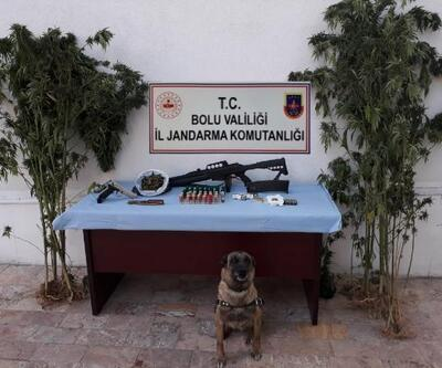 Bolu'da, uyuşturucu madde yetiştirilen eve operasyon: 2 gözaltı