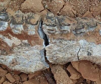 Son dakika.. Denizli'de karıncayiyen ve fil fosili bulundu