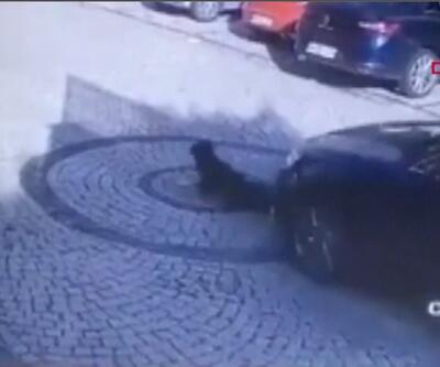 Yolda yatan köpeği aracıyla ezdi