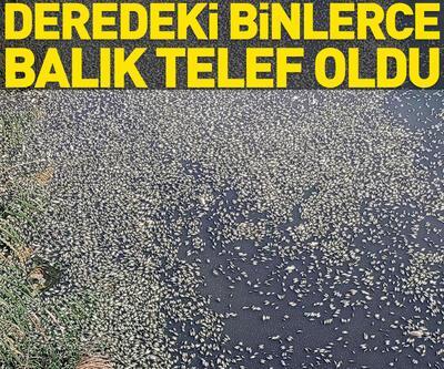 Bursa'da, derede binlerce balık telef oldu
