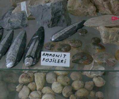 Taş ararken 550 milyon yıllık fosil buldu | Video