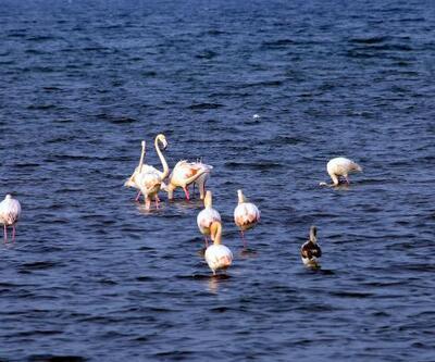 Flamingolar İzmit Körfezi'ni renklendirdi
