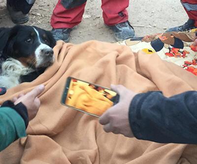 Depremde enkazda kalan köpek 65 saat sonra kurtarıldı | Video