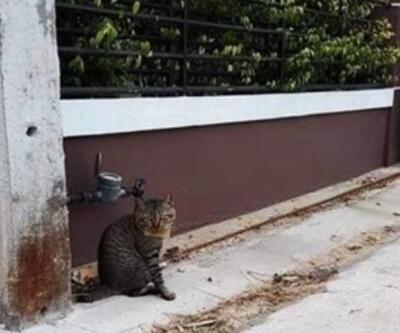 Tayland'da kaybolan kedi, 'borçlu' şekilde sahibine döndü
