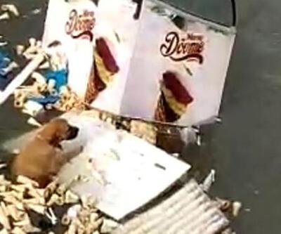 İzmir'de tsunamiye kapılan köpeğin yaşam mücadelesi kamerada   Video