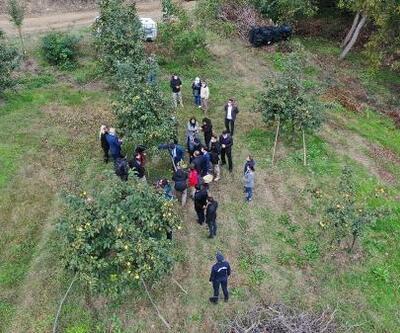 Bilecik'te 'Trabzon hurması' hasadı başladı
