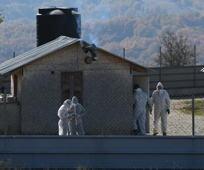 Mutasyon paniği Yunanistan'a sıçradı: Çiftliklerde tespit edildi!