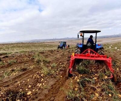 Ankara'da atıl arazide patates hasadı başladı