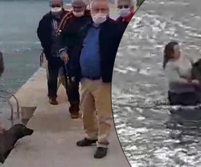 Veteriner hekim, soğuk suda şoka giren köpeği kurtardı
