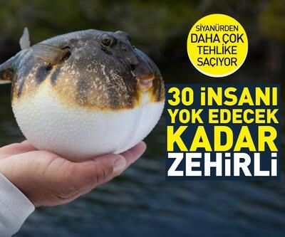 """""""Balon balığında 30 insanı öldürecek toksin var"""""""