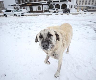 Uludağ'da kar sevinci   Video