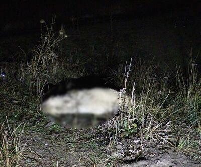 Vicdansızlık! Ankara'da 6 köpek zehirlenerek öldürüldü