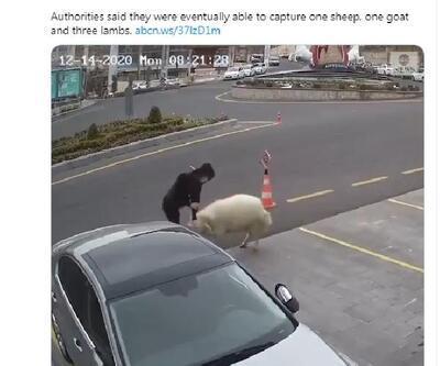 Belediye binasına girerken görüntülenen hayvanlar dünya basınında