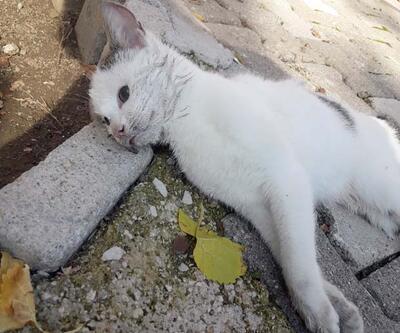 Antalya'da vahşet! 17 kedi ve 3 tavuk zehirlenerek öldürüldü
