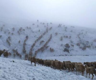 600 koyunla yaylada kar altında mahsur kaldı