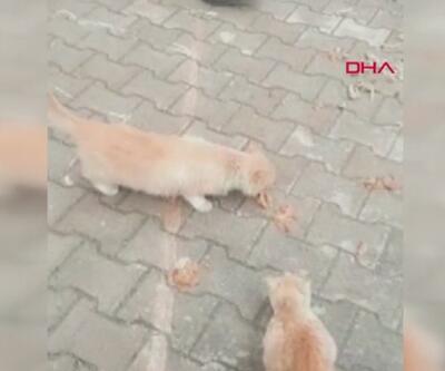 Mersin'de kedi katliamı... Mahalleli kedi ölümlerine tepki gösterdi | Video