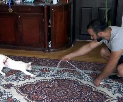 Yaralı kedinin iyileşmesi için 3 gün başında bekledi