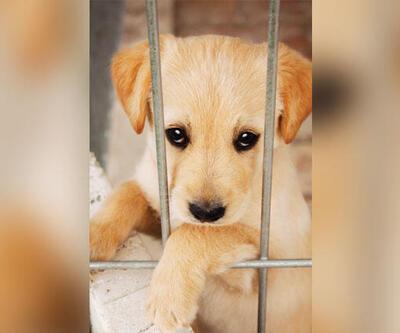 Hayvan Hakları Yasası kabul edildi mi, yasalaştı mı, ne zaman yasalaşacak?
