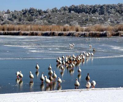 'Kuş cenneti' Yayla Gölü buz tuttu