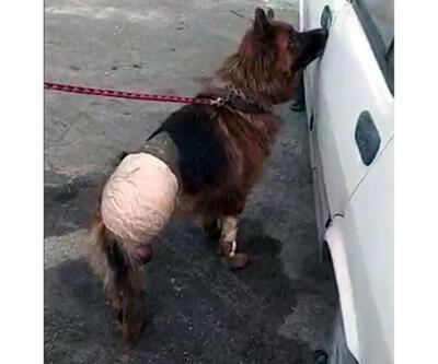 Dükkanının önüne bıraktığı köpeği, bir gün sonra ayağı kesilmiş olarak buldu