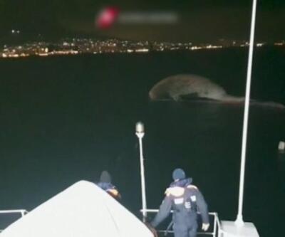 70 tonluk balina kıyıya vurdu