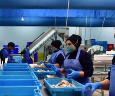 Muğla'dan geçen yıl 78 ülkeye balık ihraç edildi