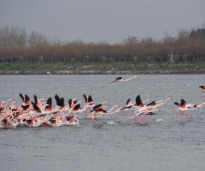 Flamingolar renkli görüntüler oluşturuyor
