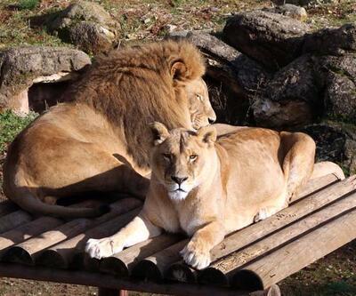 Türkiye'nin en büyük hayvanat bahçesinde hedef 5 milyon ziyaretçi