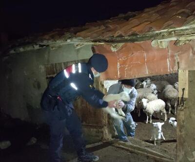 Jandarma, yavru kuzuları donmaktan kurtardı