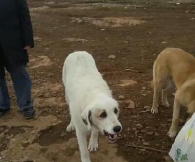 Veterinerin beslediği köpeği tüfekle vurdular