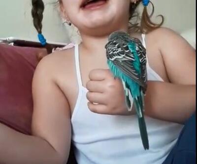 """Küçük Zeynep ölen kuşu için """"Yüreğimin parçasıydın sen"""" diye göz yaşı döktü"""