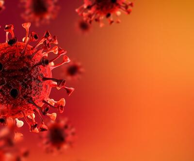 Koronavirüse çok benzeyen yeni bir virüs keşfedildi: RacCS203