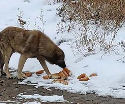 Yiyecek bulamayan sokak hayvanlarına vatandaş sahip çıktı