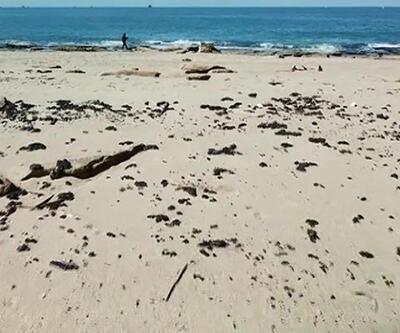 Akdeniz'den gelen öbek öbek katran sahile vurdu