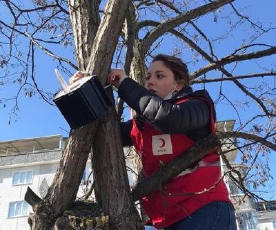 Kızılay gönüllüleri, ağaçlara kuş yuvaları yerleştirdi