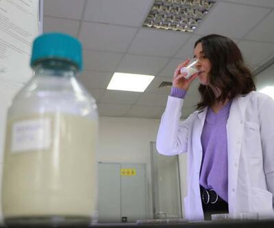 Veganlar için besin kaynağı olacak kenevirden süt üretildi
