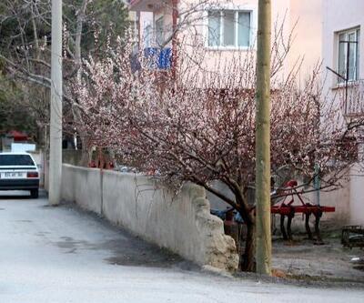 Sandıklı'da ağaçlar çiçek açtı