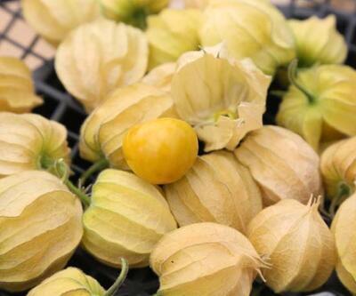 Dünyanın en zengin lif oranına sahip meyvesi! Kan dolaşımı ve metabolizmayı hızlandırıyor! 100 gramı 15 TL