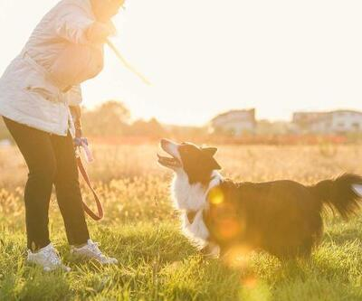 Evcil hayvan sahipleri, günlük yaşamlarında daha çok gülüyor