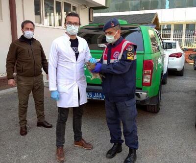 Jandarmanın yaralı bulduğu baykuş korumaya alındı