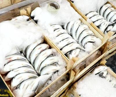 Karadeniz'deki hamsi yasağı Egeli balıkçılara yaradı
