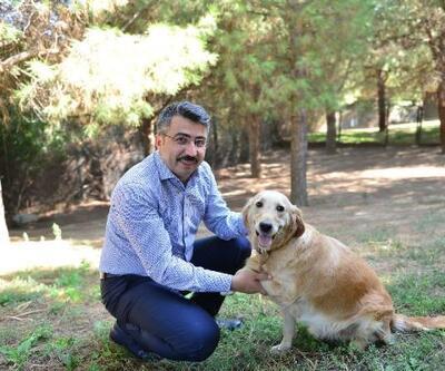 Sokak hayvanları, Yıldırım Belediyesi ile güvende