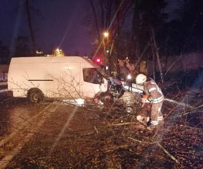 Panelvan minibüsün çarptığı ağaç devrildi: 1 yaralı