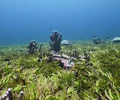 Gezegeni deniz çayırları kurtarabilir