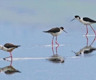 Hersek Lagünü, yaz göçmen kuşlarını da ağırlıyor