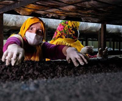 Toros Dağları'ndaki seralarda üretiliyor!