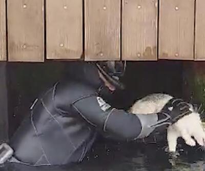 Sıkışan kediyi sahil güvenlik ekibi kurtardı