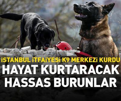 Hayat kurtaracak köpekleri yetiştiriyor