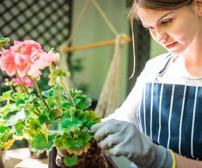 Evde bitki yetiştirmek isteyenlere 5 öneri! Pandemide yemek pişirmenin bile önüne geçti