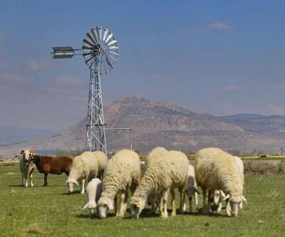 Denizli Büyükşehir'den hayvan yetiştiricilerine rüzgargülü desteği